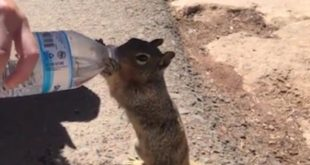 thirsty squirrel asking for water